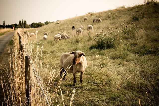 ohrada pro ovce
